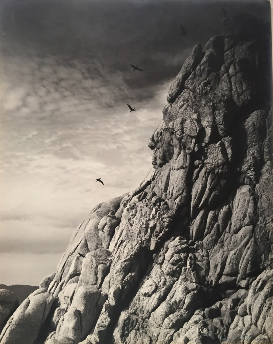 Untitled (cliff with birds)